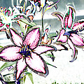 Pink Lilies by Diana Haronis