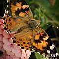 Pink N Orange by Chris Berry