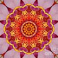Pink Orchid Mandala-1 by Renata Ratajczyk