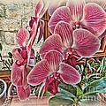 Pink Orchids by Joan  Minchak