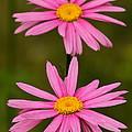 Pink Pair by Rick  Monyahan