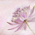 Pink Palette by Jacky Parker