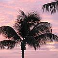Pink Palm by Fred Sheridan