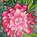 Pink Peony by Jill Alexander