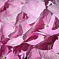 Pink Petal Pushing by Susan Herber