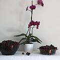Pink Phalaenopsis Orchid And Sour Cherries by Georgeta  Blanaru