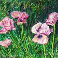 Pink Poppies by Laurie Morgan