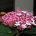 Pink Pretty by Sharon Downey Miniard