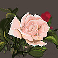 Pink by Robert North Jr