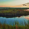 Pink Swamp Sunrise by Michael Thomas
