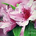 Pink Tiger by Melissa Moore-Clingenpeel