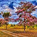 Pink Trees by Galeria Trompiz