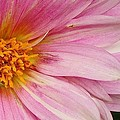 Pinks The One by Bruce Bley