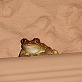 Pinky Toad by Mark Holbrook