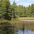 Pintail Pond by Jennifer  King