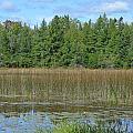 Pintail Pond2 by Jennifer  King