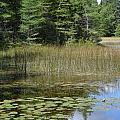 Pintail Pond4 by Jennifer  King