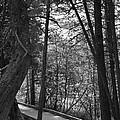 Pintail Trail2 by Jennifer  King
