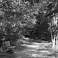 Pintail Trail3 by Jennifer  King