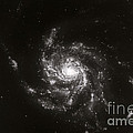 Pinwheel Galaxy, M101 by Science Source