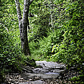Pisgah Path by Rob Travis