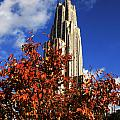 Pittsburgh Autumn Leaves At The Cathedral Of Learning by Will Babin