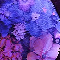 Planet Of Flowers by Anne-Elizabeth Whiteway