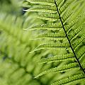 Plant Detail, Close Up by Axiom Photographic