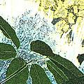 Plant Life Inside-outside by Lenore Senior