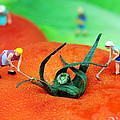 Planting On Tomato Field by Paul Ge