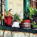 Plants On Porch by Susan Savad