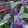 Plasticized Cape Lily Digital Art by Merton Allen