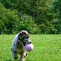 Play Ball by Art Dingo