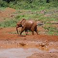 Playing In The Mud by Carol Evans