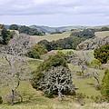 Pleasanton Ridge - North by Karen  W Meyer