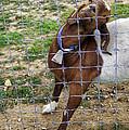 Please Exonerate Me 2 - Billy Goat by Madeline Ellis