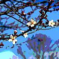 Plum Tree Blossom by Bob Whitt