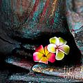 Plumeria Flowers by Mitch Shindelbower
