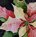 Poinsettia by Sam Sidders