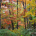 Point Beach State Forest by Christopher J Franklin