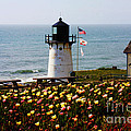 Point Montara Lighthouse Vista by Carol Groenen