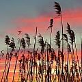 Point Pelee Sunset by Don Downer