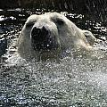 Polar Bear 1 by Jeffrey Peterson