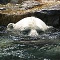 Polar Bear 2 by Jeffrey Peterson