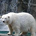 Polar Bear 2 by Richard Bryce and Family