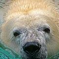 Polar Bear Swim by David Rucker