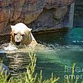 Polar Bear Swim by Methune Hively