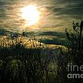Polarized Sunset by Mitch Shindelbower