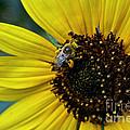 Pollen Laden  by Susan Herber
