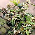 Pollenator by Deborah Hughes